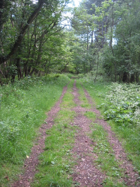 While you can (3): continuing path round woodland