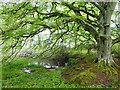 NH5857 : The tarn in Drummondreach Wood : Week 21