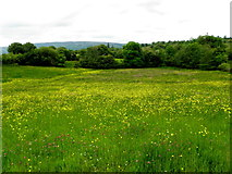 G9424 : Field with buttercups, Cavan by Kenneth  Allen