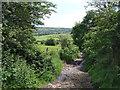 SJ9696 : Yew Tree Lane by Stephen Burton