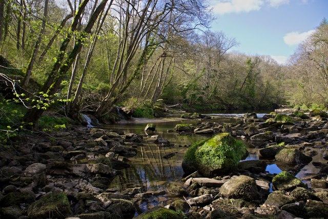 River Ure, Hackfall Woods