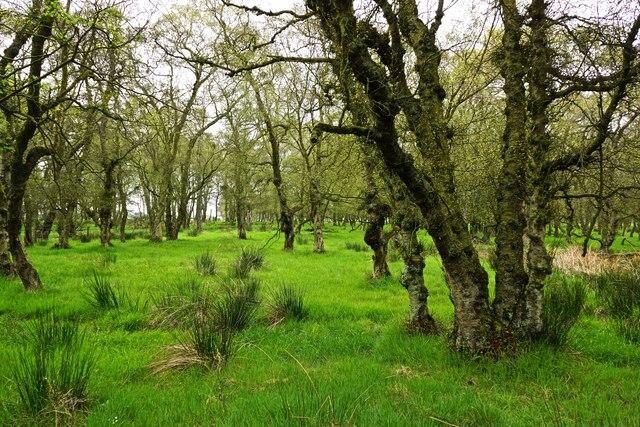 Marshy Woodland, Eston Moor