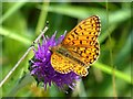 ST1699 : Small Pearl-bordered Fritillary, Aberbargoed Grasslands by Robin Drayton