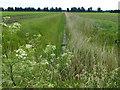 TL4686 : Dike crossing Byall Fen near King's Farm, Welches Dam by Richard Humphrey
