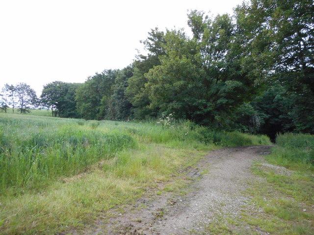 Low Wood near Elsecar