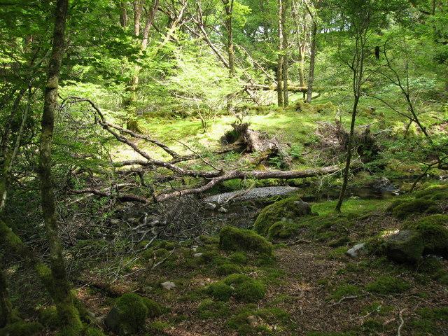 Fallen trees in Coed Llennyrch