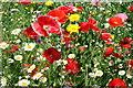 SJ3075 : Wild Flowers at Ness by Jeff Buck