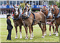 NT1472 : Horse team at the Royal Highland Show : Week 25