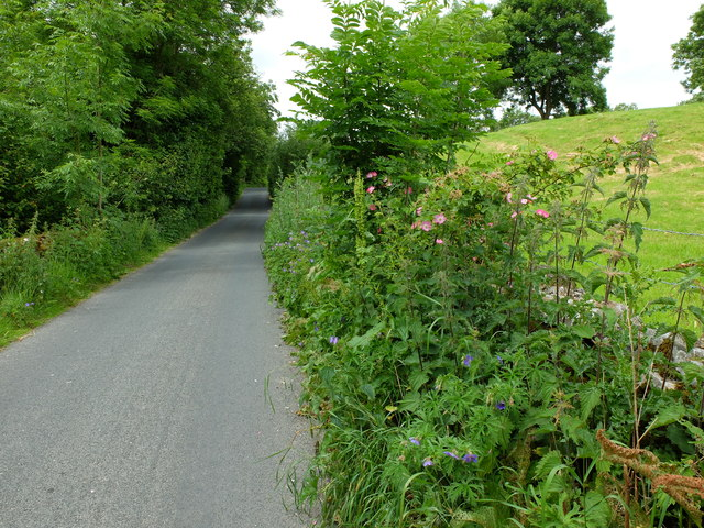 View along the lane, west of Cowgill