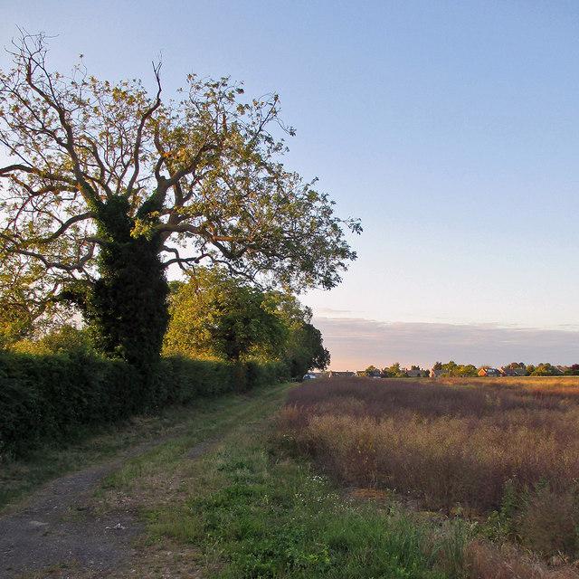 A summer evening at Netherhall Farm