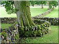 NN7347 : Stone walls at Fortingall : Week 31