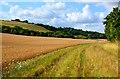 SU3659 : Chalk downland, Combe, Berkshire by Edmund Shaw