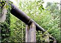 J3469 : Pipeline, Belvoir forest, Belfast (August 2014) by Albert Bridge