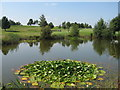 SJ6369 : Pond on Vale Royal Abbey Golf Course by Sue Adair