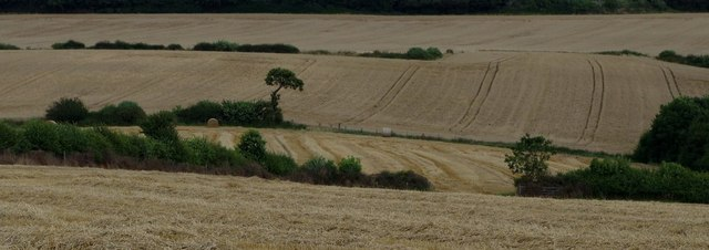 Arable fields