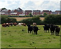 SK6407 : Farmland on the edge of Leicester by Mat Fascione