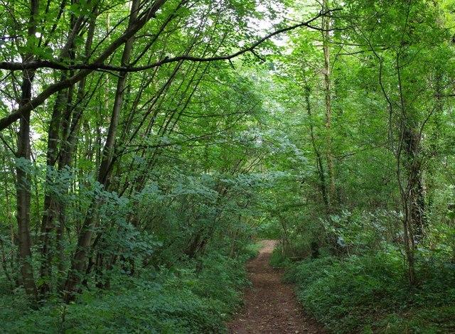 Roseland Wood footpath