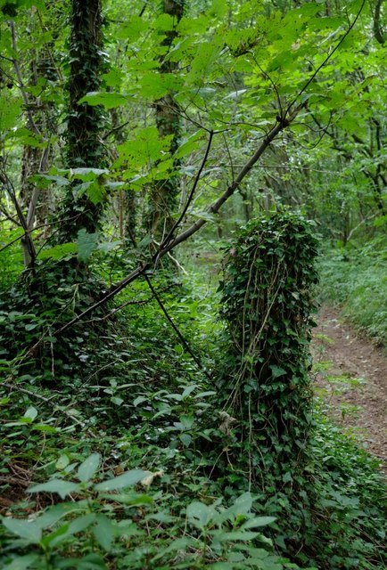 By the path through Roseland Wood