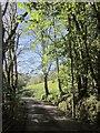 SX3470 : Drive to Bearland Bridge Cottage by Derek Harper