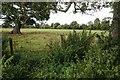 SO3548 : Farmland near Norton Wood by Philip Halling