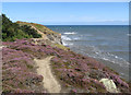 NZ8513 : Heather-clad clifftop, Sandsend by Pauline E