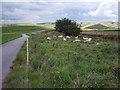 SJ9674 : Lane to Wickinford Farm by Stephen Burton