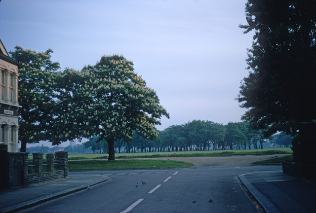 Early morning view of Wanstead Flats