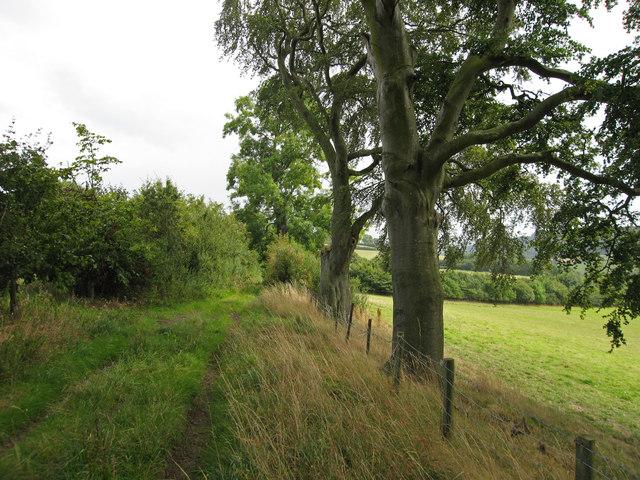 Track near Cwm