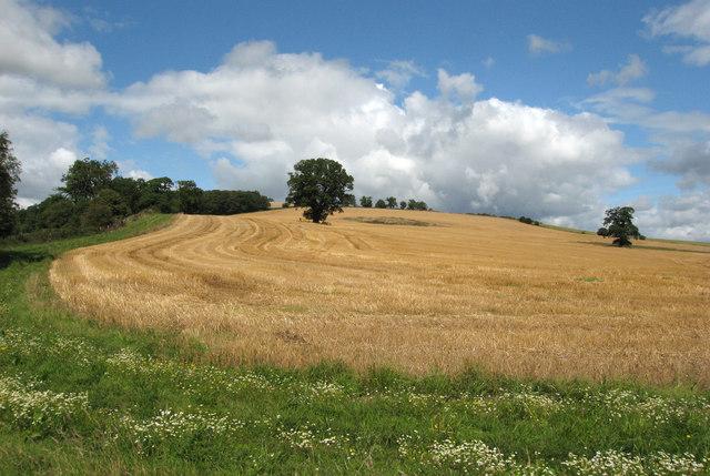 Field at Walcot Park