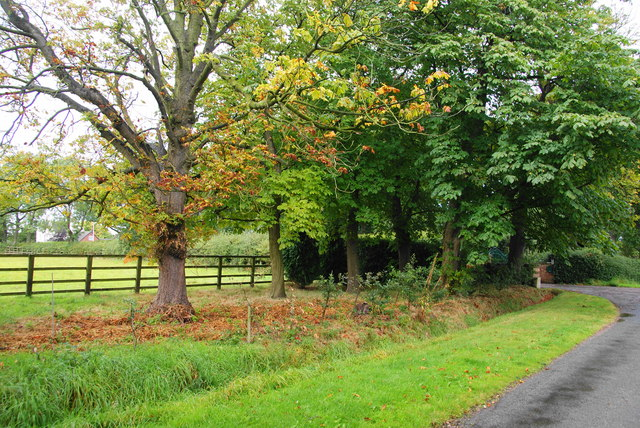 Horse chestnut trees by the entrance to Wanfield Hall