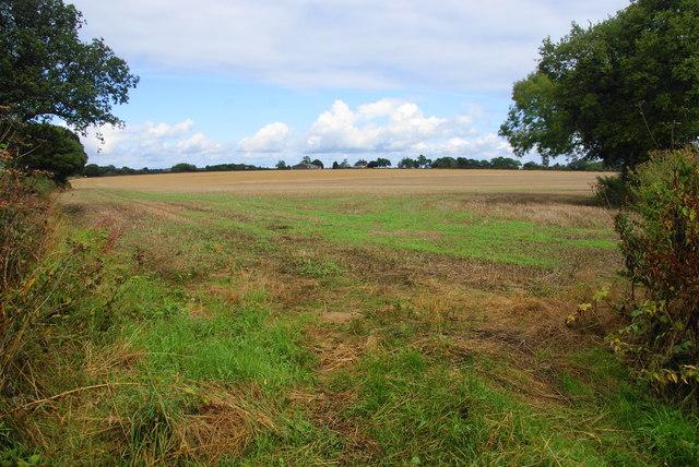 Field near Wanfield Hall