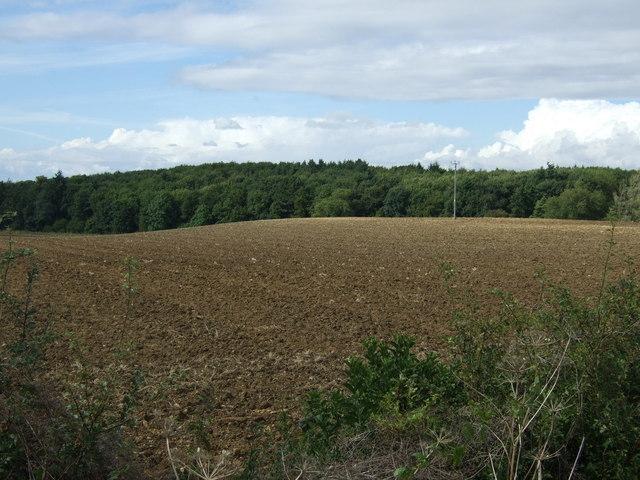 Farmland towards Bushrubs Wood