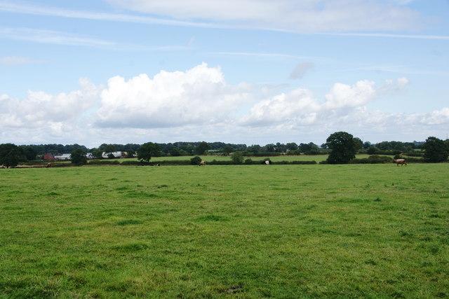 A field of cows near Woodcock Heath
