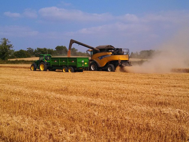 Wheat harvesting at Great Gidding