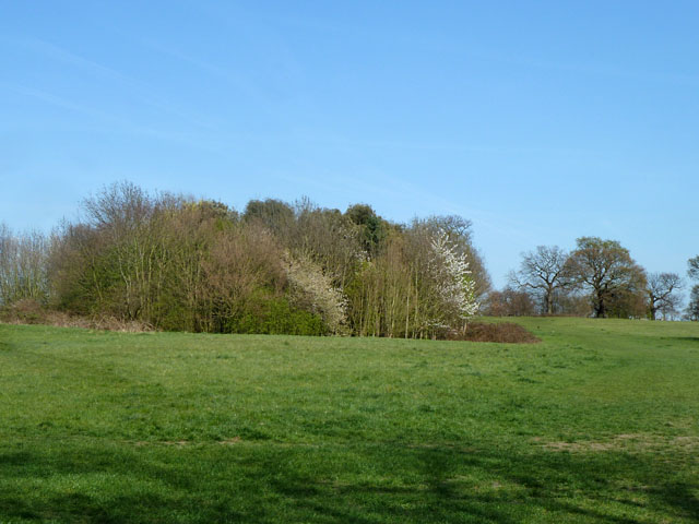 Tree clump, Morden Park