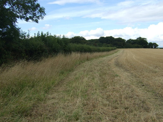 Stubble field and hedgerow