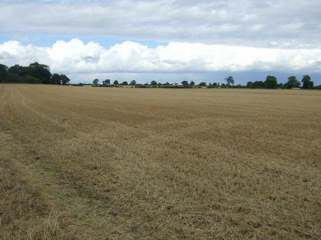Stubble field near Newton Spinney