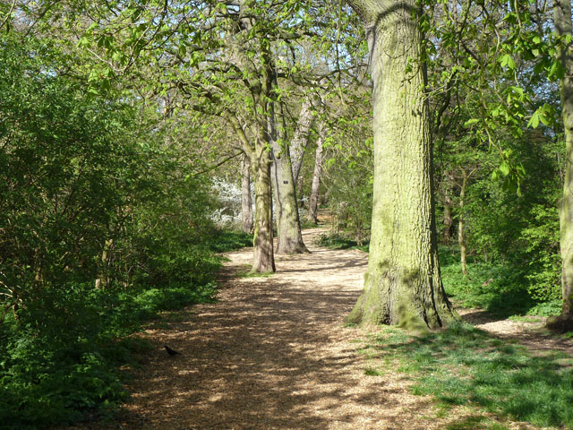 Path along edge of Morden Park