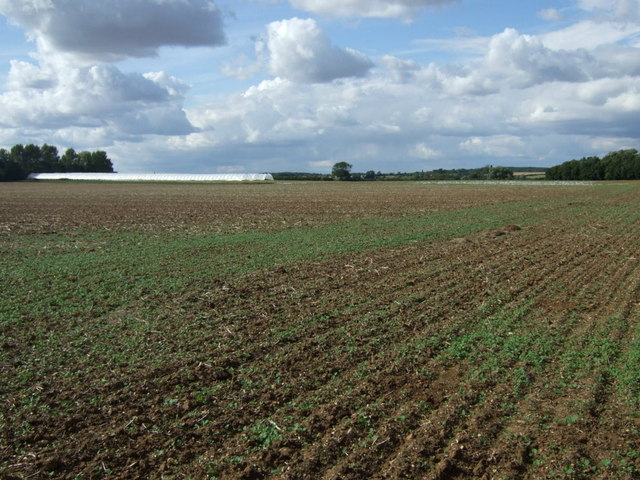 Crop field near Lyveden Farm
