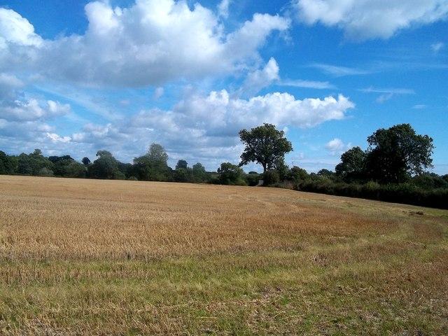 Field of Stubble near Old Myers