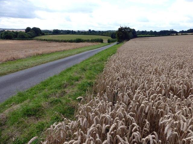 Minor road near South Elkington