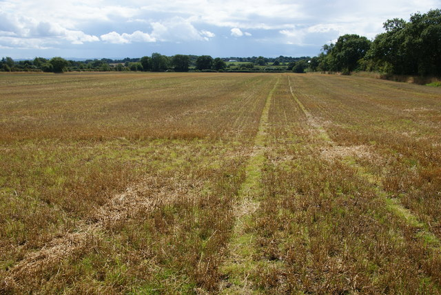 Harvested field on Leese Hill