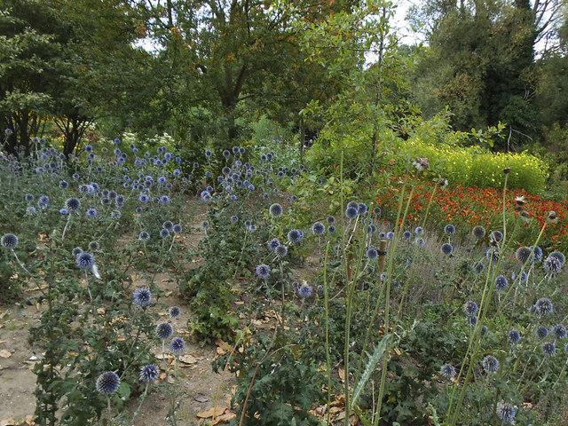 Blue flowers in Greenwich Park