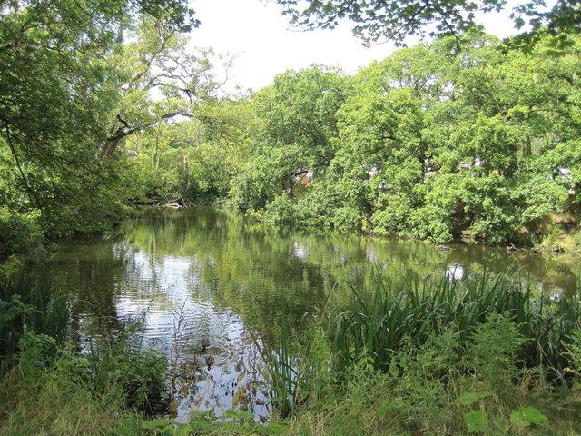 Pond Adjacent to Manor Farm (Summer)