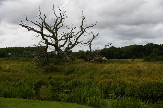 Dead tree north of Baconsthorpe Castle, seen over the moat