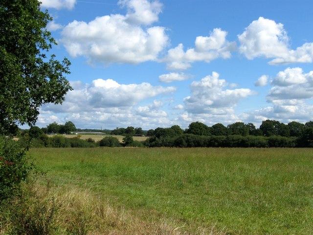 Stump Field
