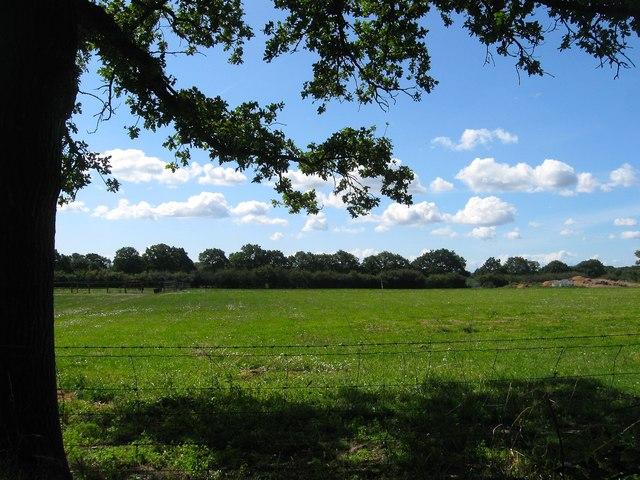 Magoty Field