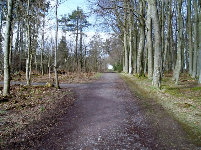 Path in Crombie Country Park