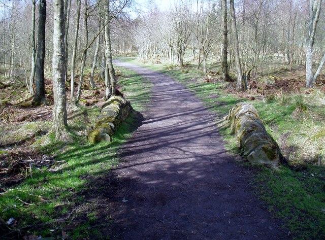 Path in Peddiestone Wood, Crombie Country Park