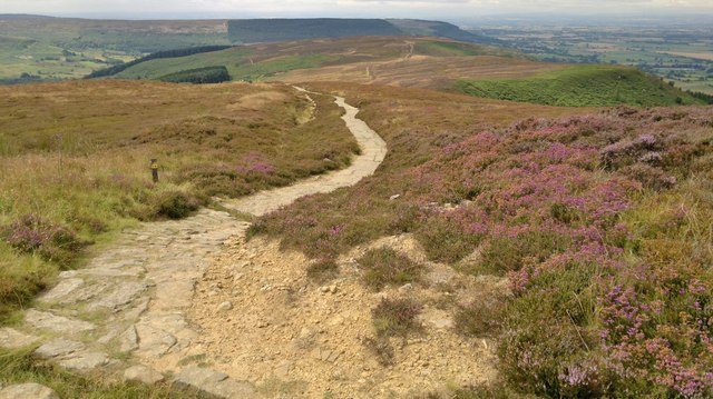 On Cleveland Way above Faceby Bank